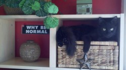 why-be-normal